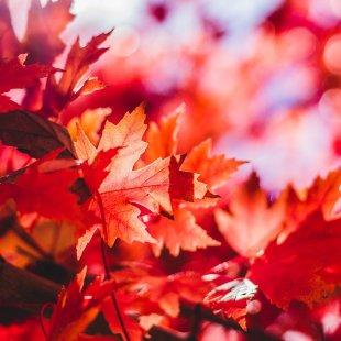Petit marché d'automne