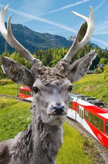 Train and zoo
