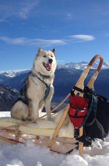 Dog-sledding, cani-rando
