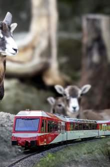Train et zoo