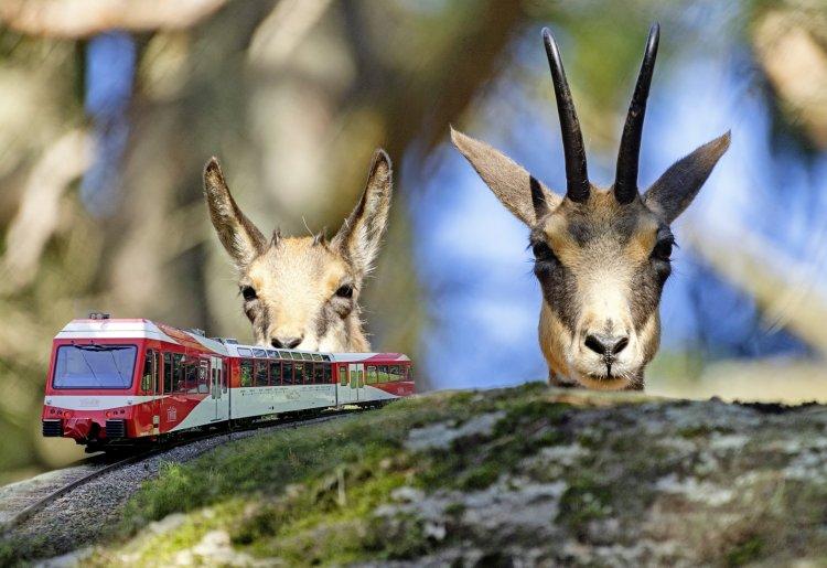 Mont-Blanc Express et Zoo des Marécottes