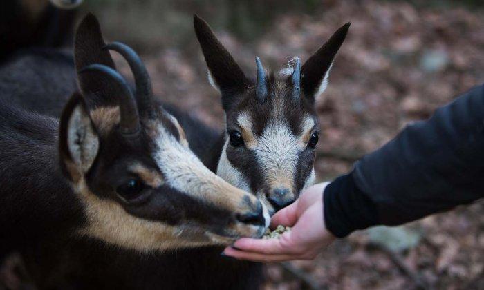 Chasse aux bonbons et visite du zoo