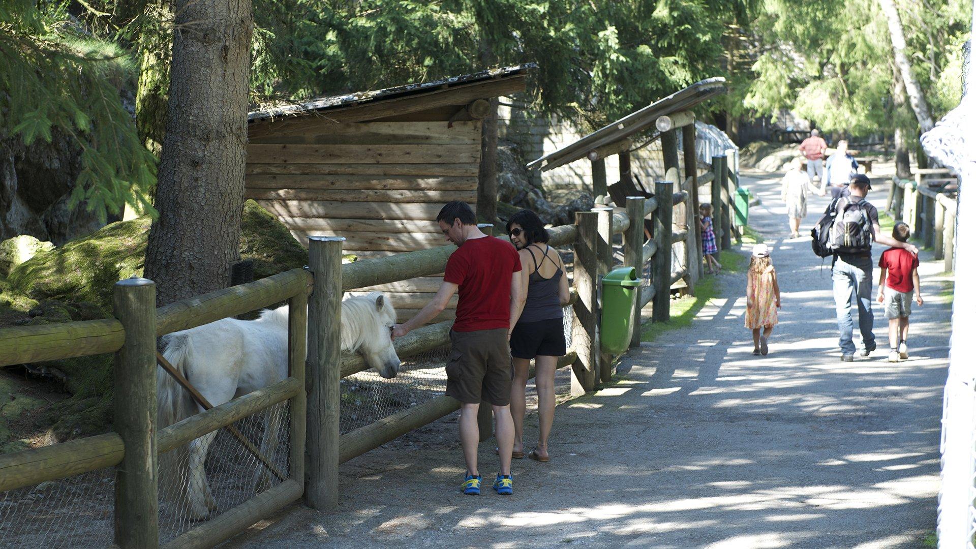 Visite guidée du zoo et matinée nourrissage